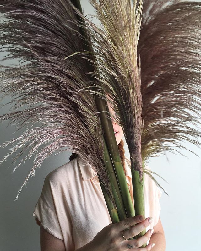 My obsession with pampas grass keeps growing, especially with this color, just a tinge of silvery purple.  Currently prepping for the dreamiest all white and natural grasses wedding 👟🕊🌾☁️🌬🍚
