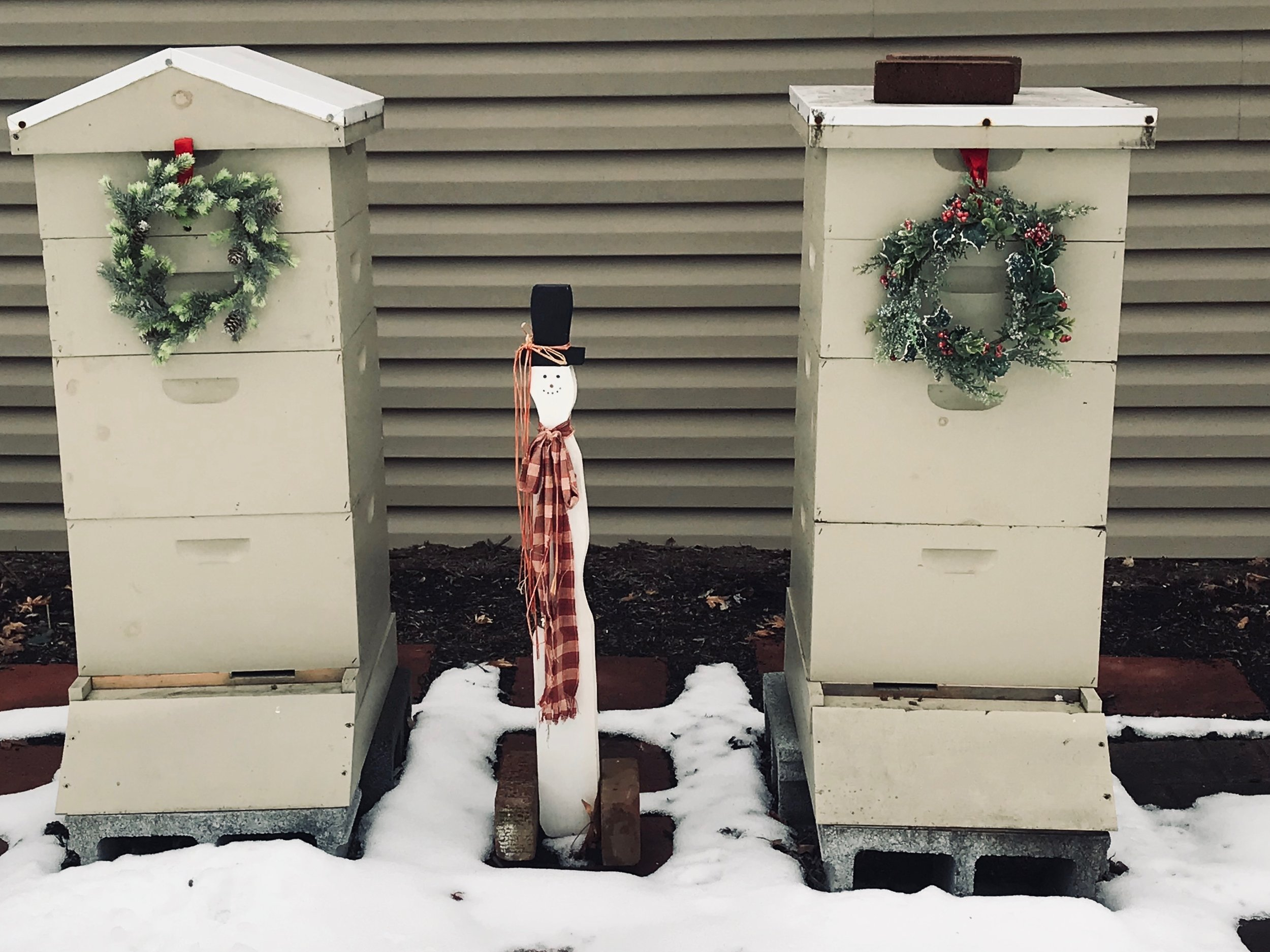 Winter Hives at the Thrasher Farm.