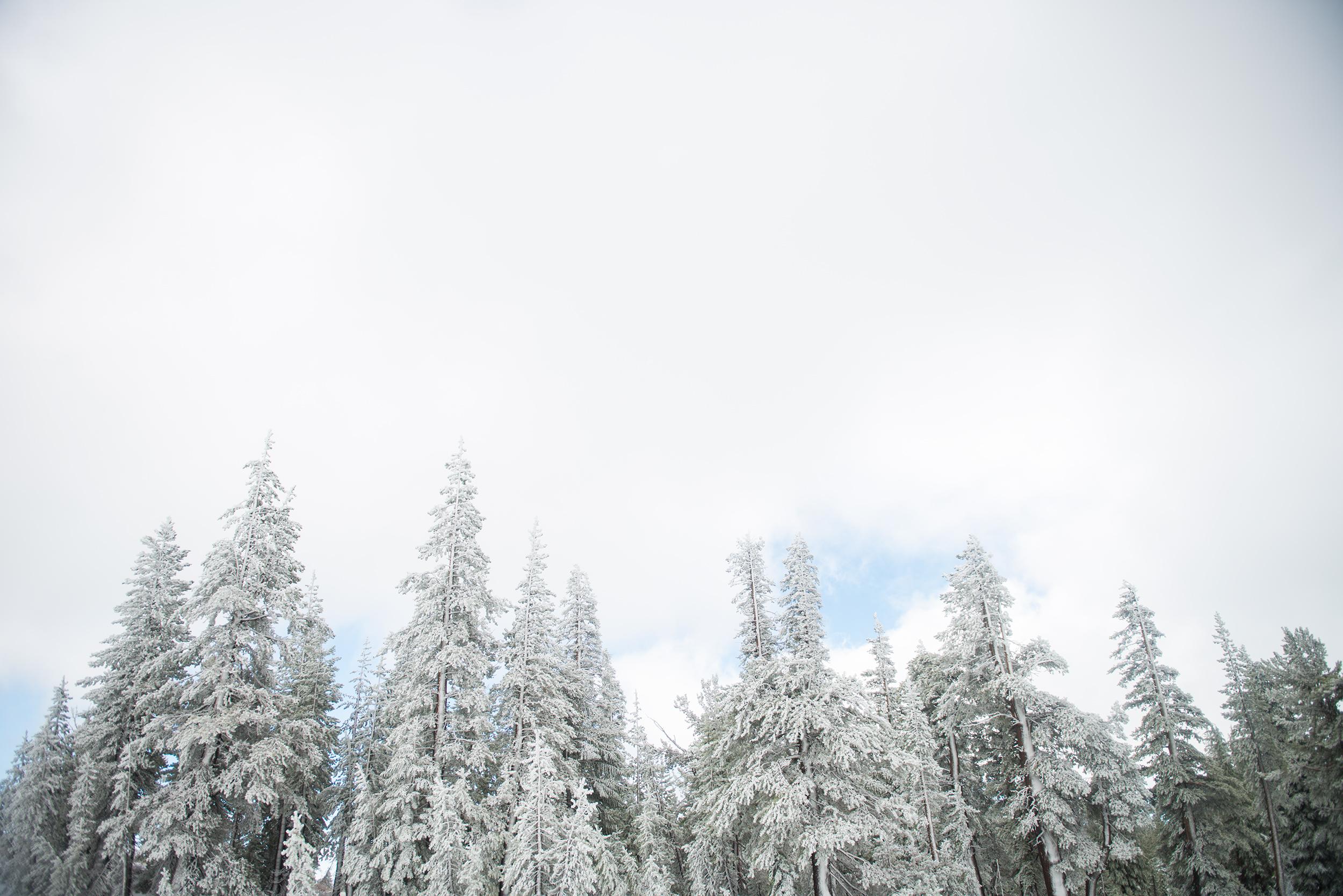 Mommoth-snow-2016.jpg