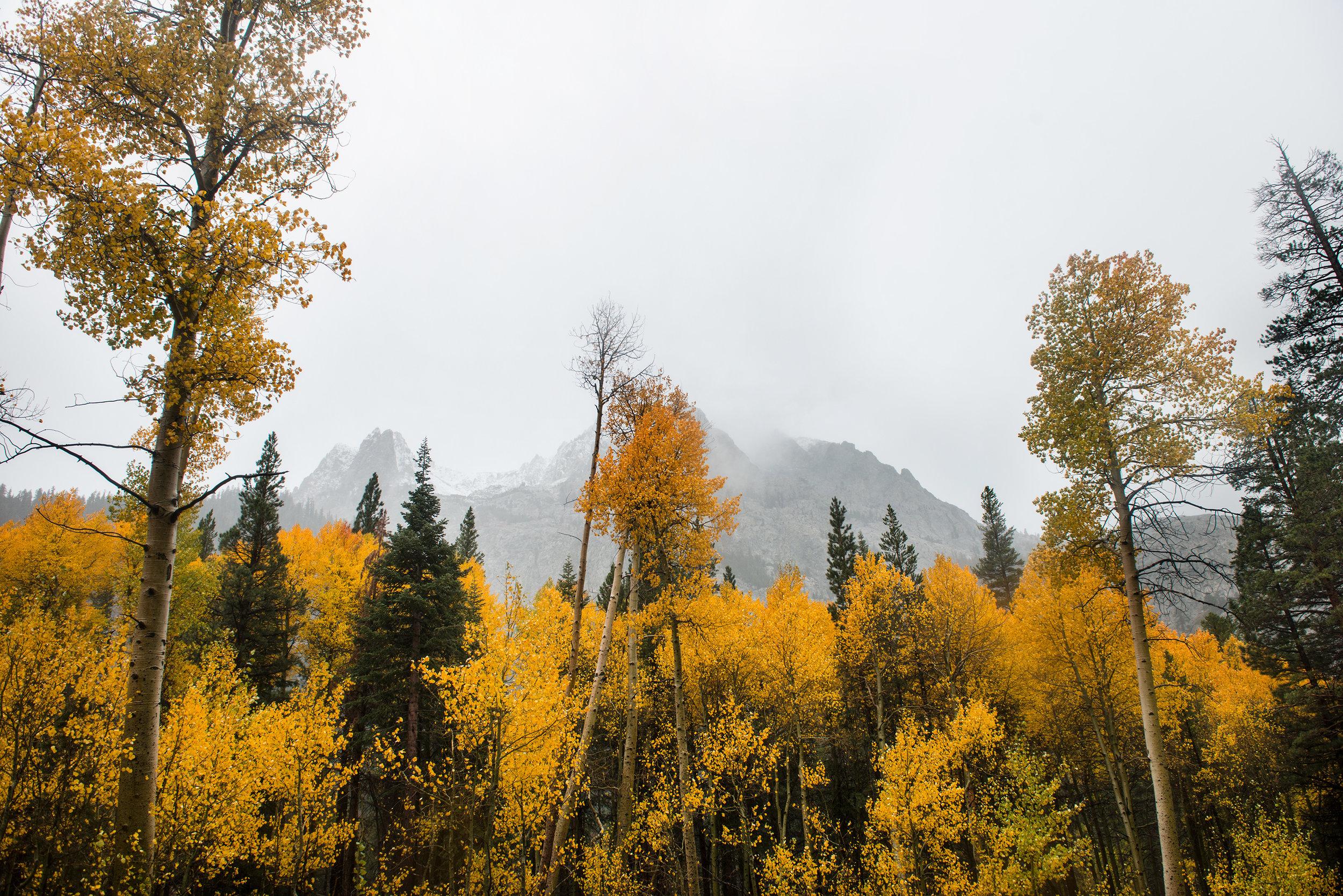 mammoth-lakes-fall-colors-Laura-bear.jpg