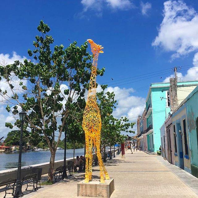 Enjoy this beautiful giraffe sculpture, a remnant of Cuba's Biennial Arts Festival! 🦒 photo by: @cubasarahmarsh