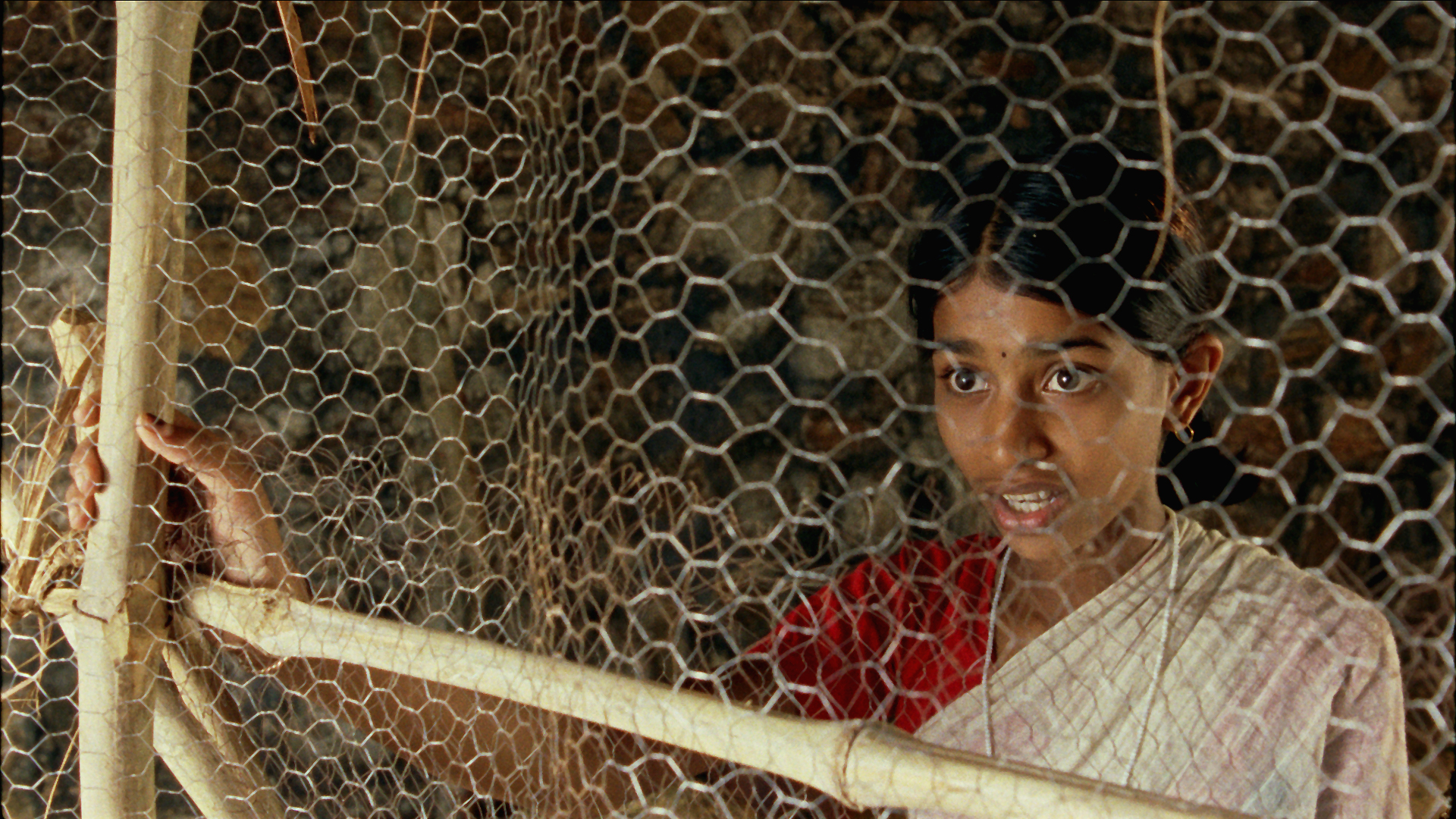 Vanaja behind Chicken coup Wire.jpg