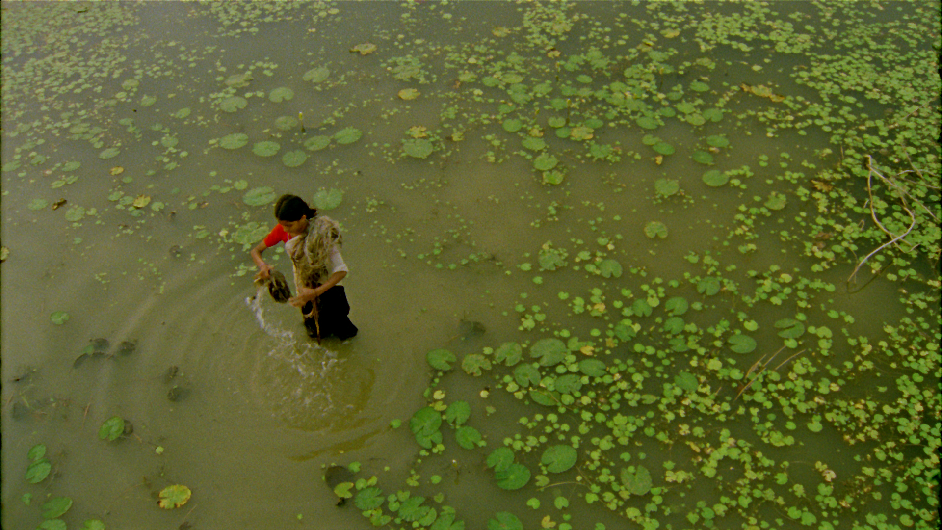 Vanaja in Pond.jpg