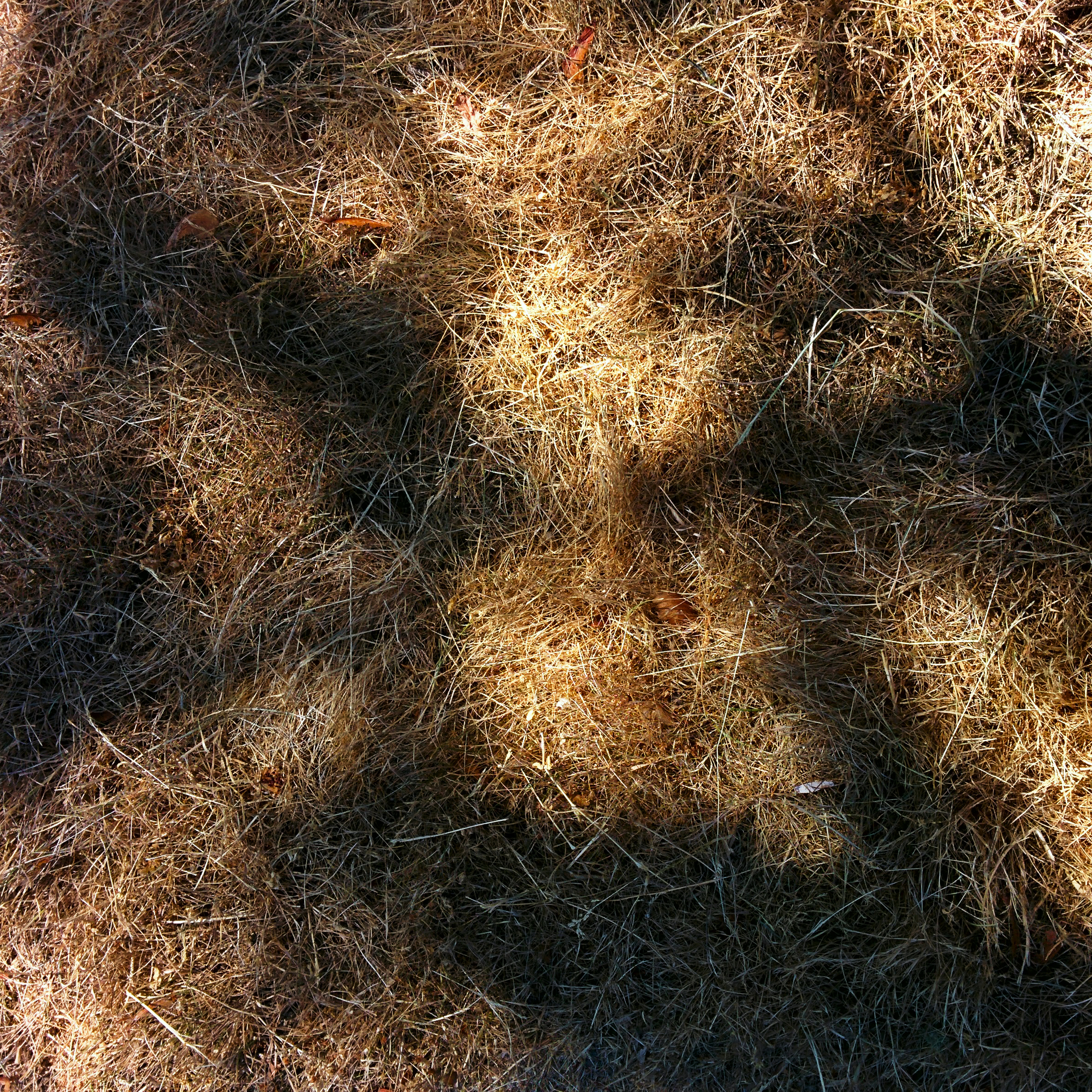 Tree Shadow on Dry Grass