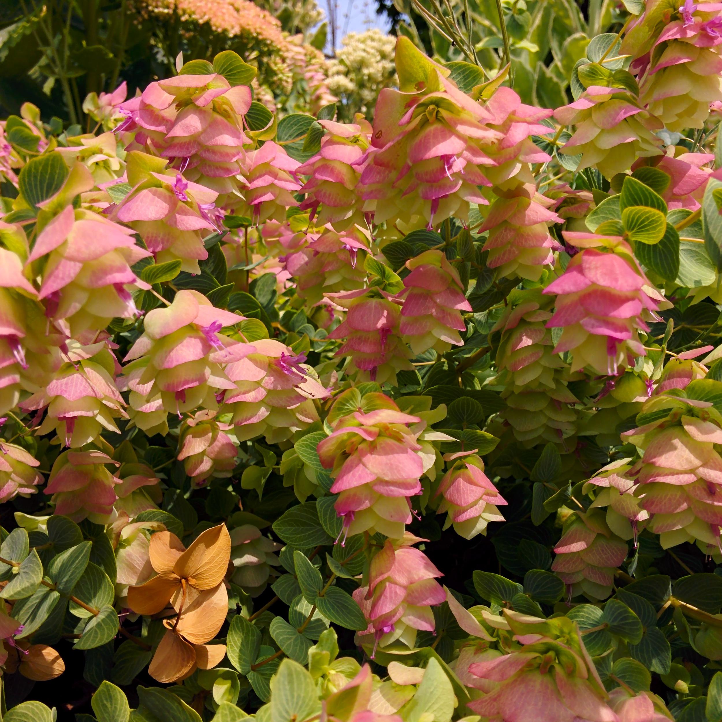 Dangling Pink Flowers
