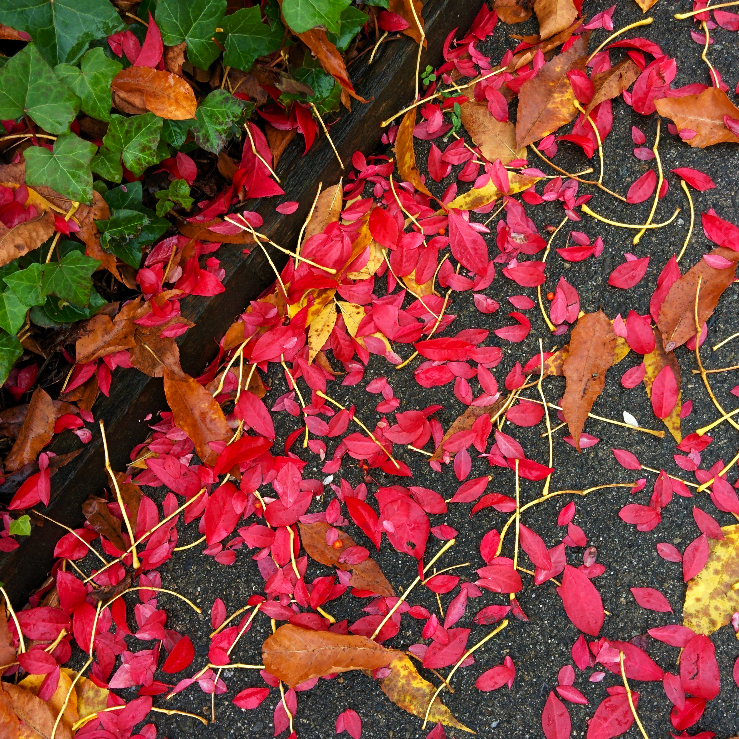 Moist, Fall Leaves