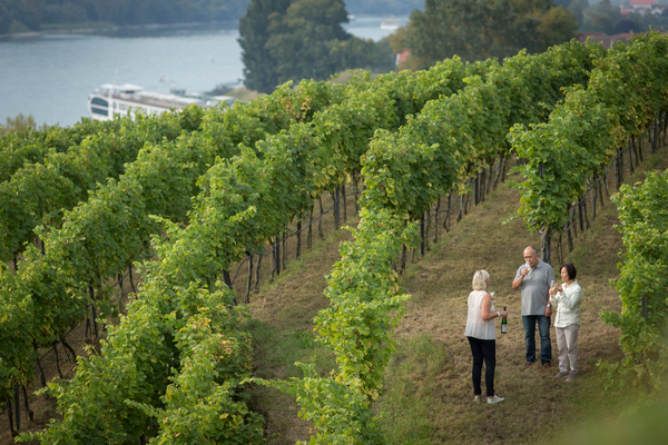 German vineyard tour.jpg