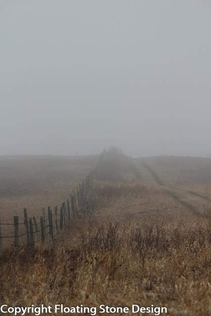 Fenceline Fog