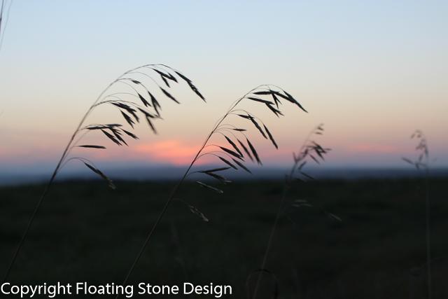 Summer Grass #2