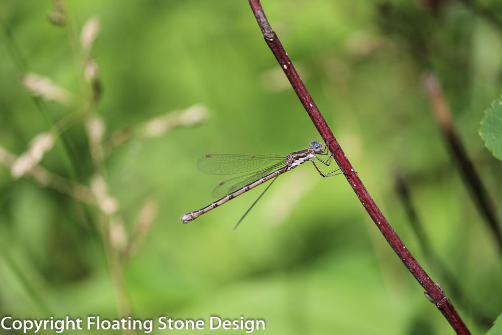 Dragonfly #3