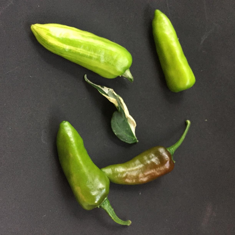 Fish pepper