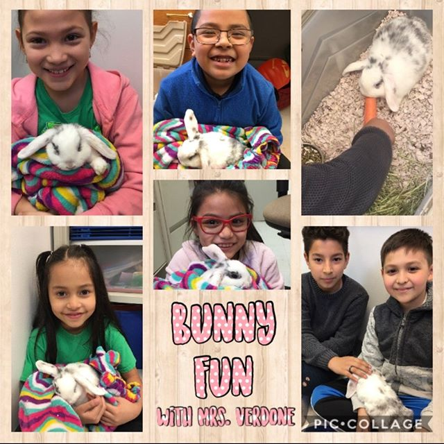 We had a special visitor yesterday  thanks to Mrs. Verdone! 🐰💗🐰