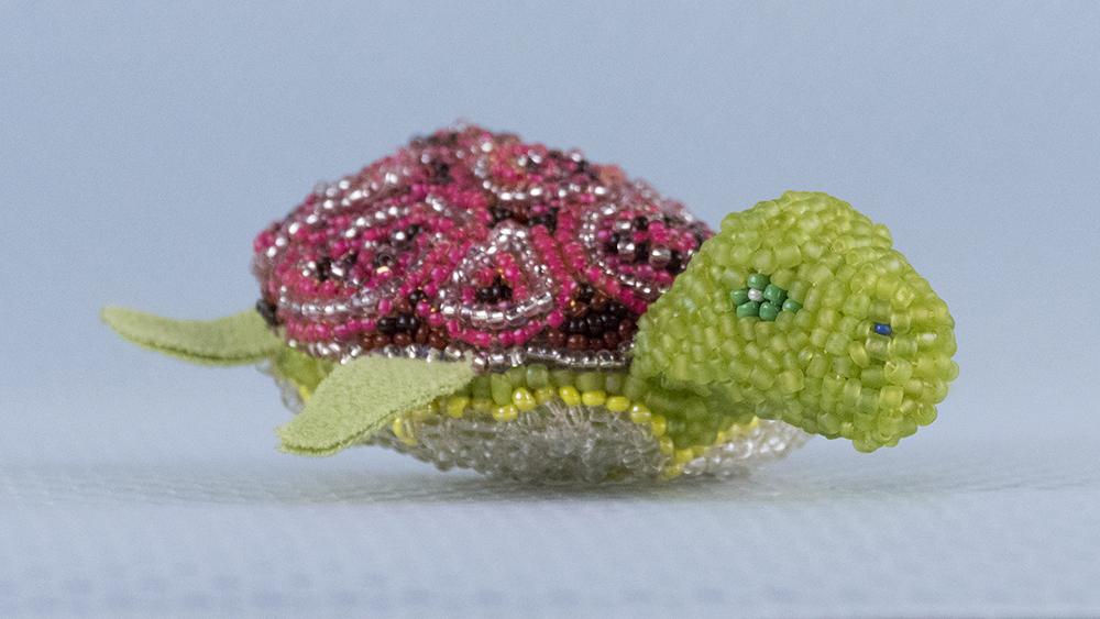 TITTA DJUR: tiny turtle 22h 55m