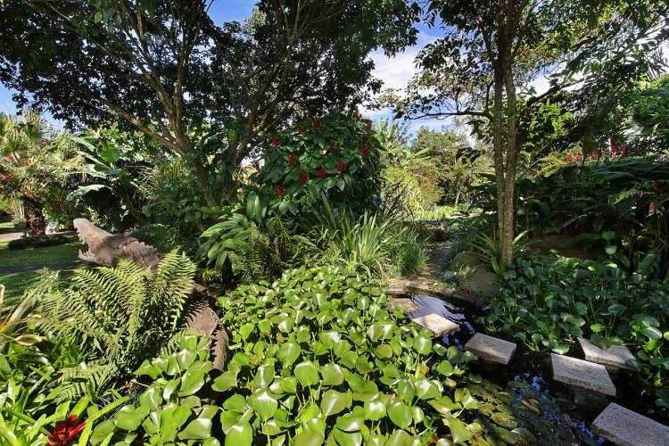 galeria_jardines_helechos-7bd51684d7.jpg