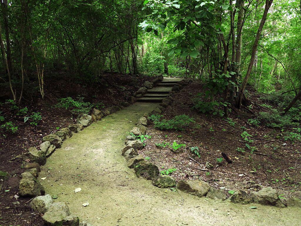 Tail hiking in Costa Rica.jpg