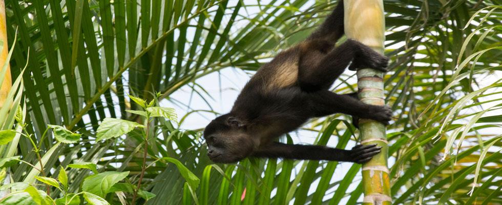 monkey-slider.jpg
