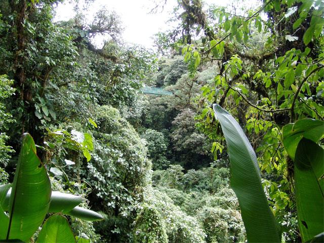 25_orquideasmonteverdecostarica.jpg