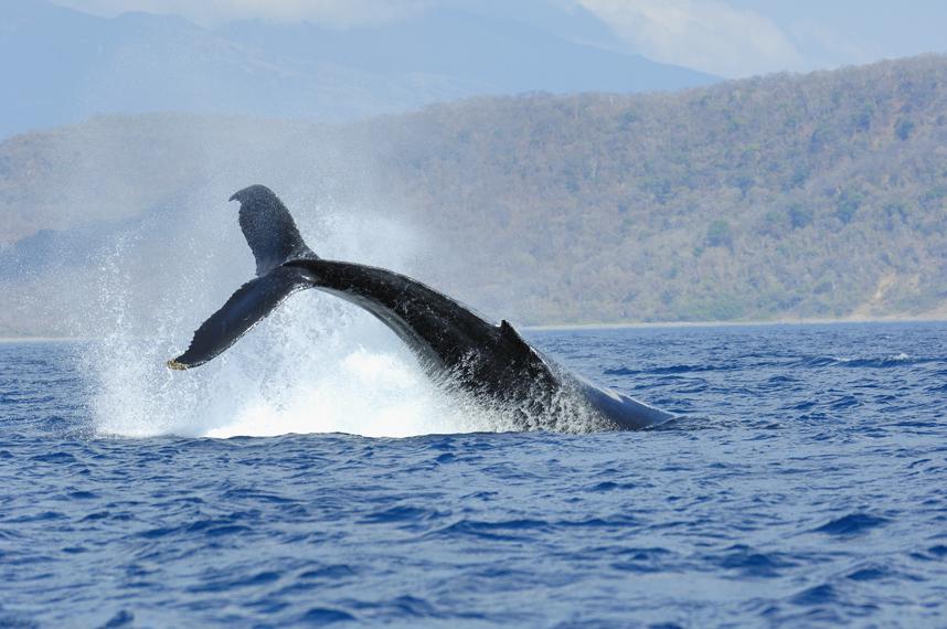 whales la cuisingahotel.jpg
