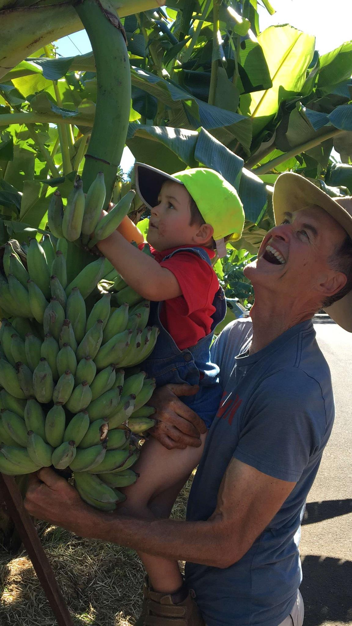 Duncan helps Isaac harvest verge-grown bananas during the Better Homes and Gardens shoot.