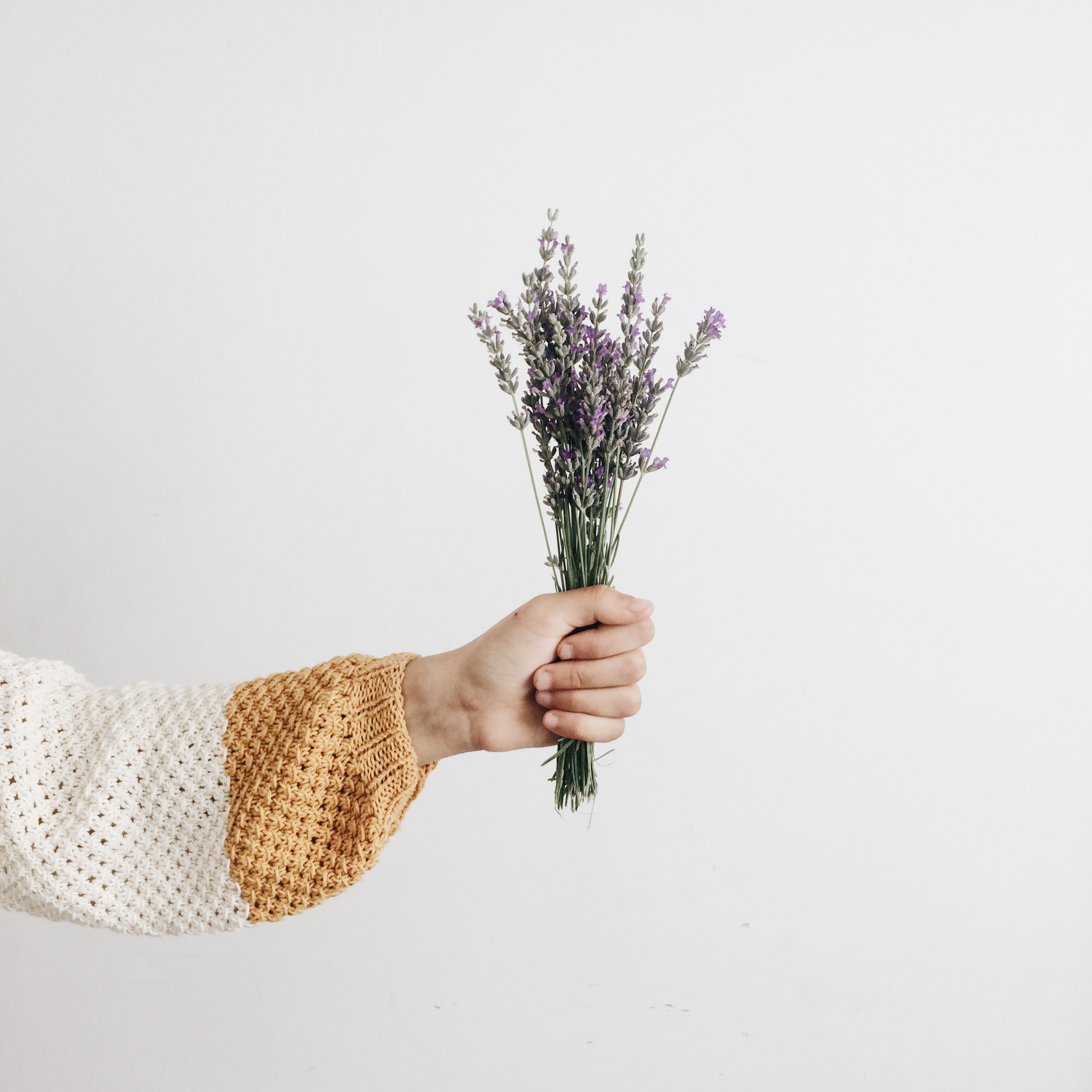 Outstretched hand holding a bouquet of lavender.
