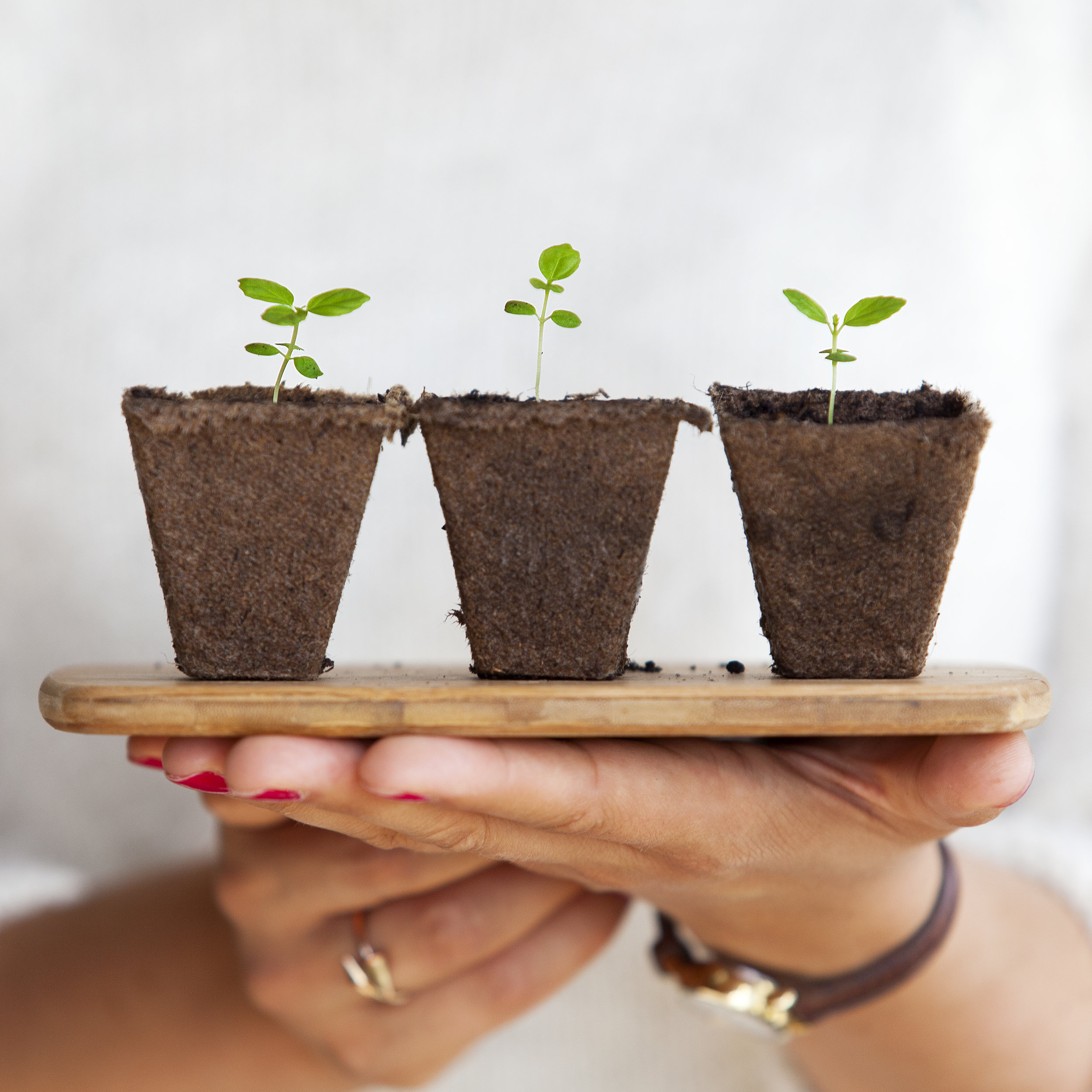 Hands holding three small potted plants.