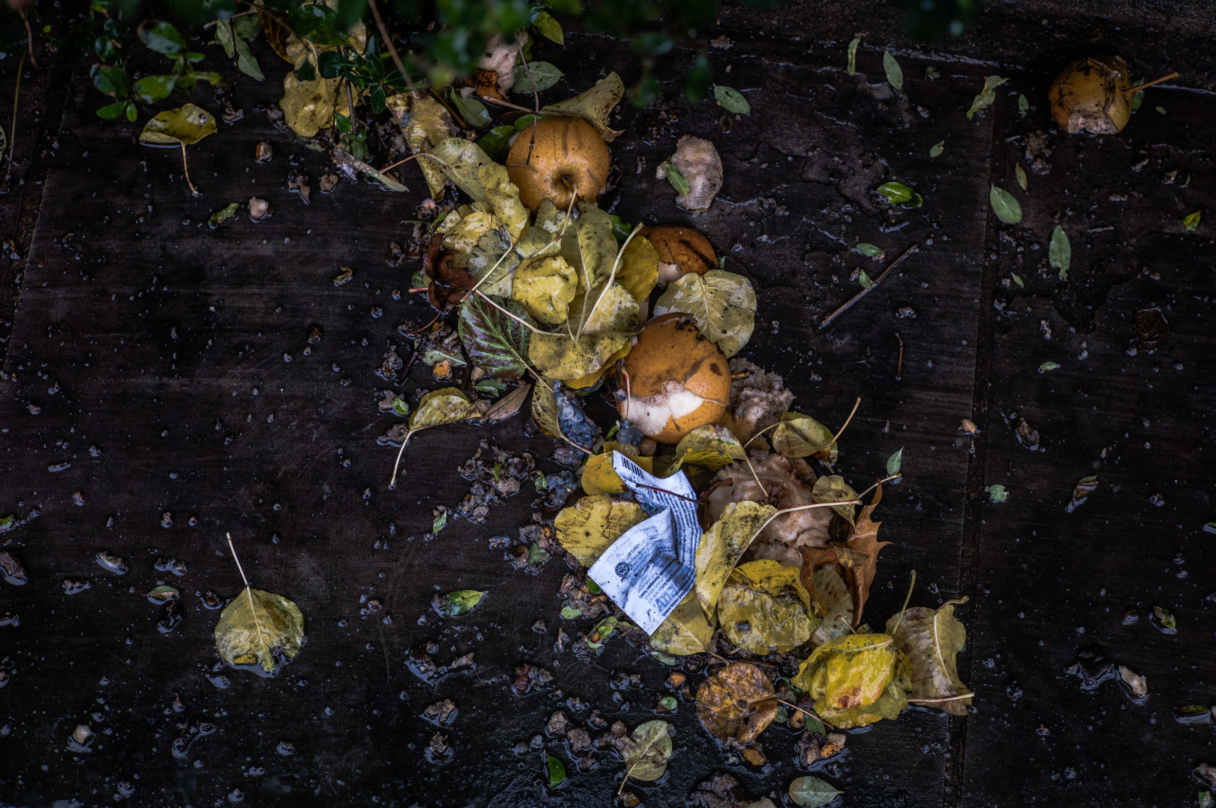Rotting food waste with leaves and paper.