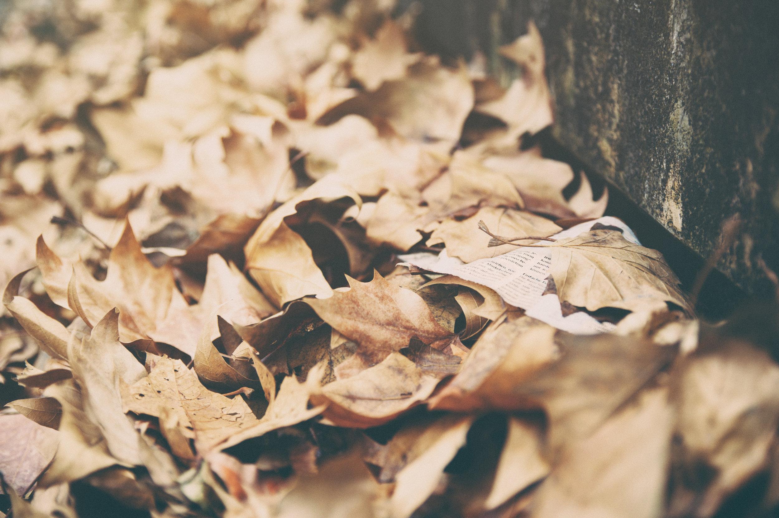 Dead Leaves.