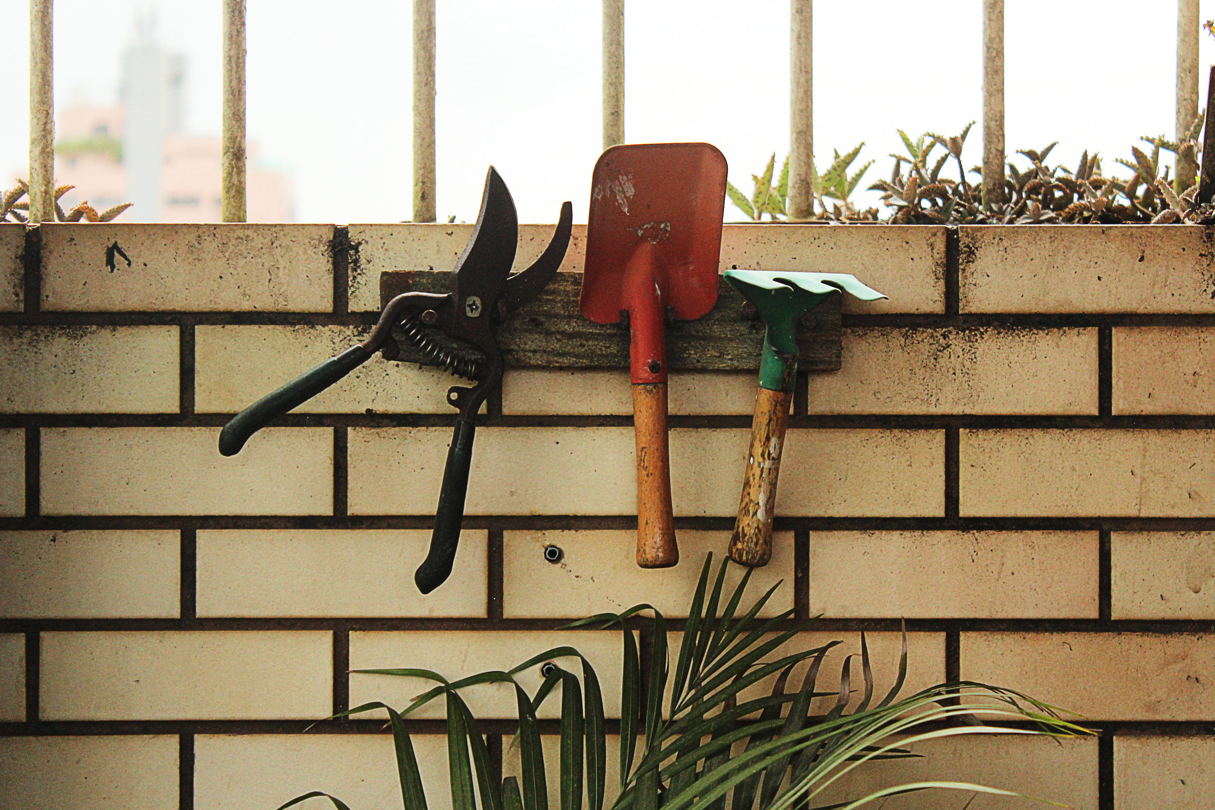 Gardening tools hanging on a wall.