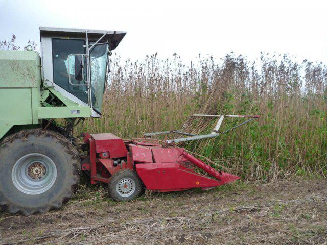 Harvesting hemp in Holland - image courtesy of Hempcrete.com.au