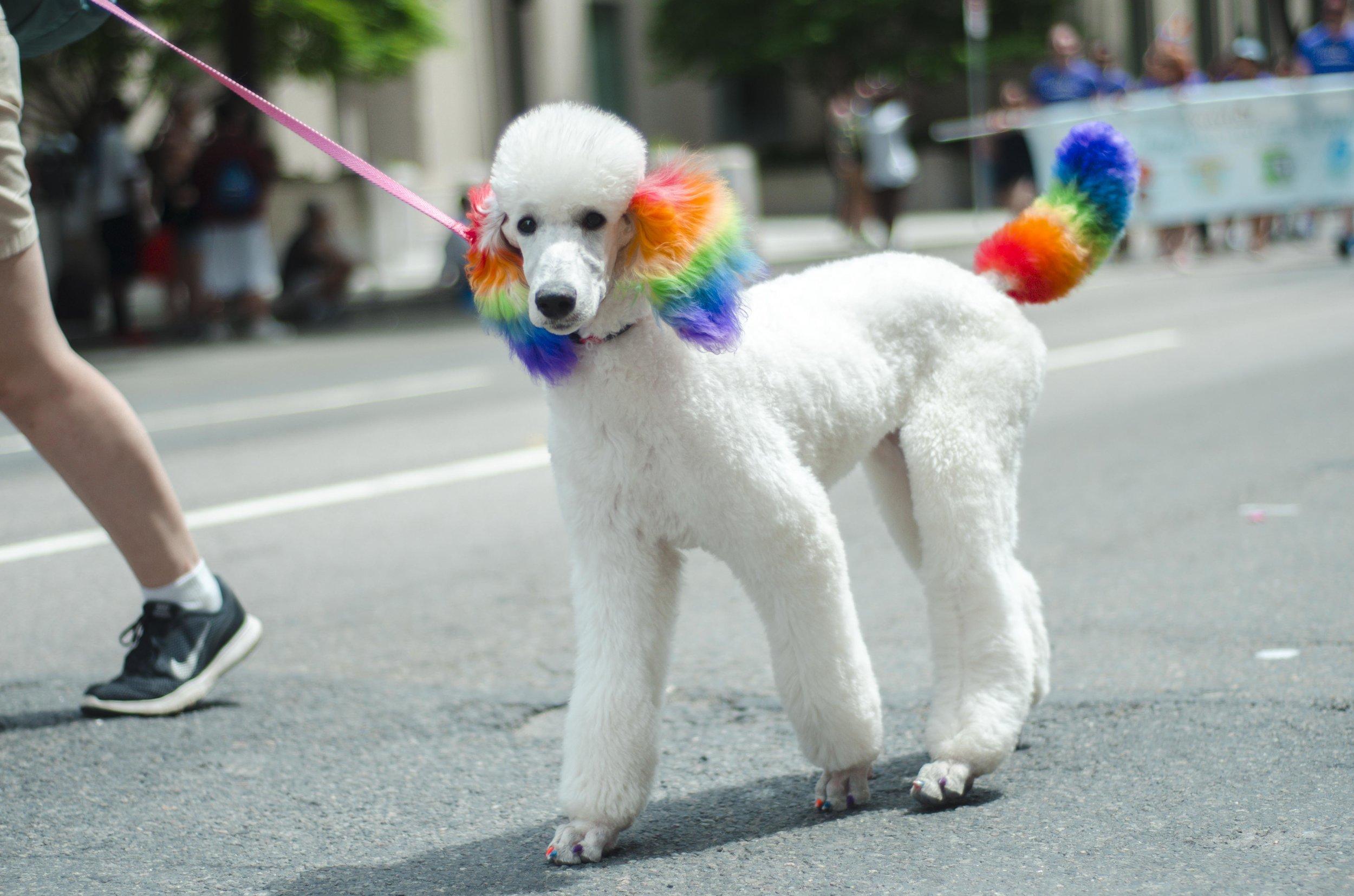 Boston Pride 18_64.jpg