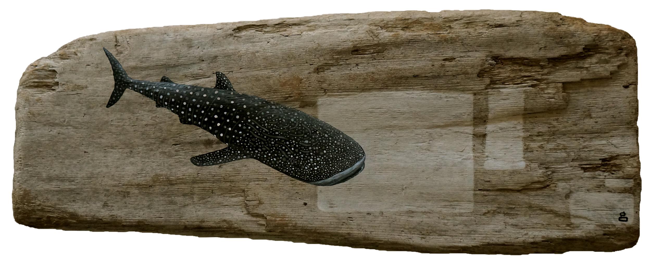 Whale Shark Galactic Cartograph