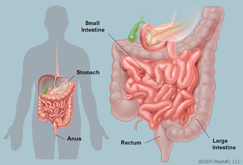 intestines-anatomy.jpg