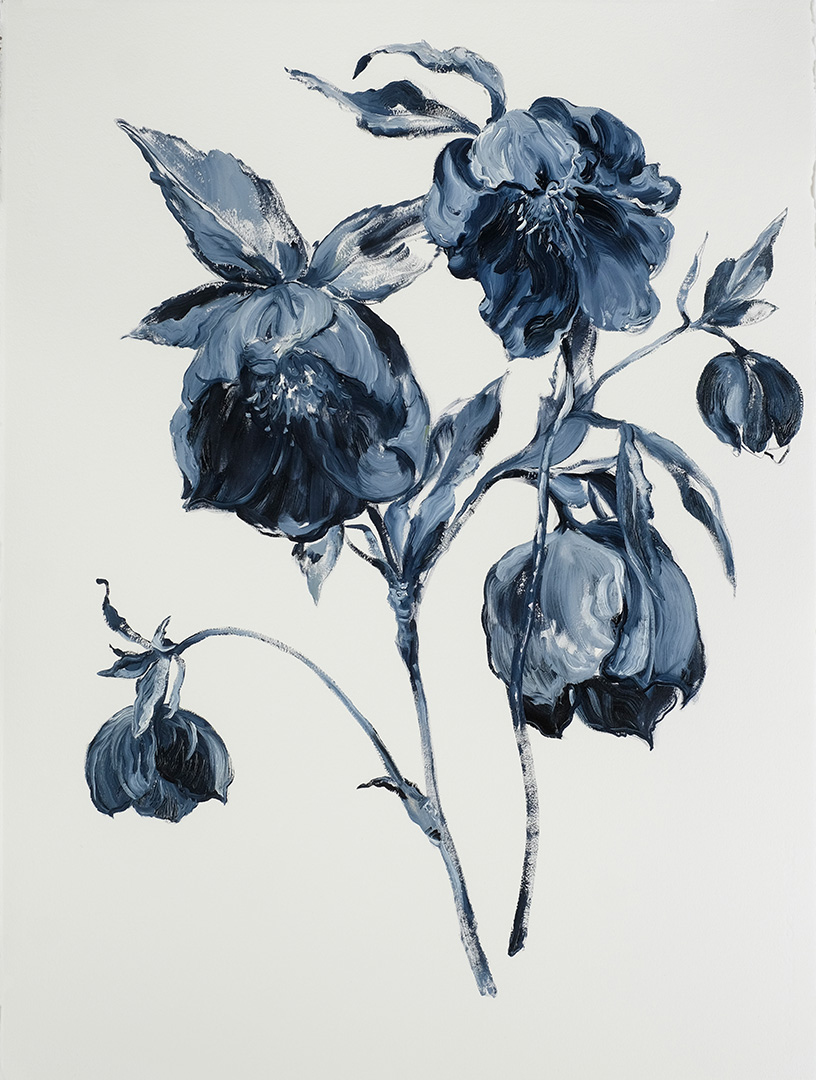 Hellebores- Winter Blue