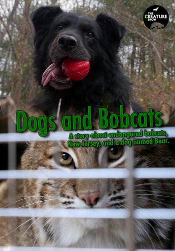 Dogs and Bobcats