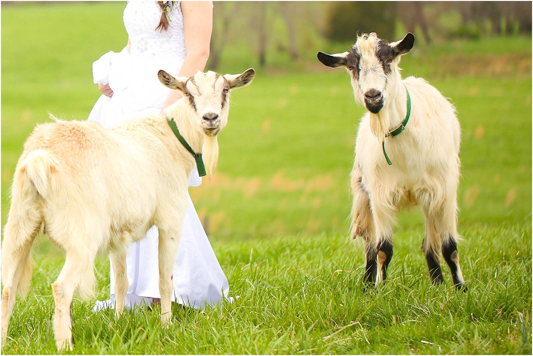 Central_VA_Barn_at_Edgewood_Farm_Farm_to_Table_Styled_Shoot_0049.jpg