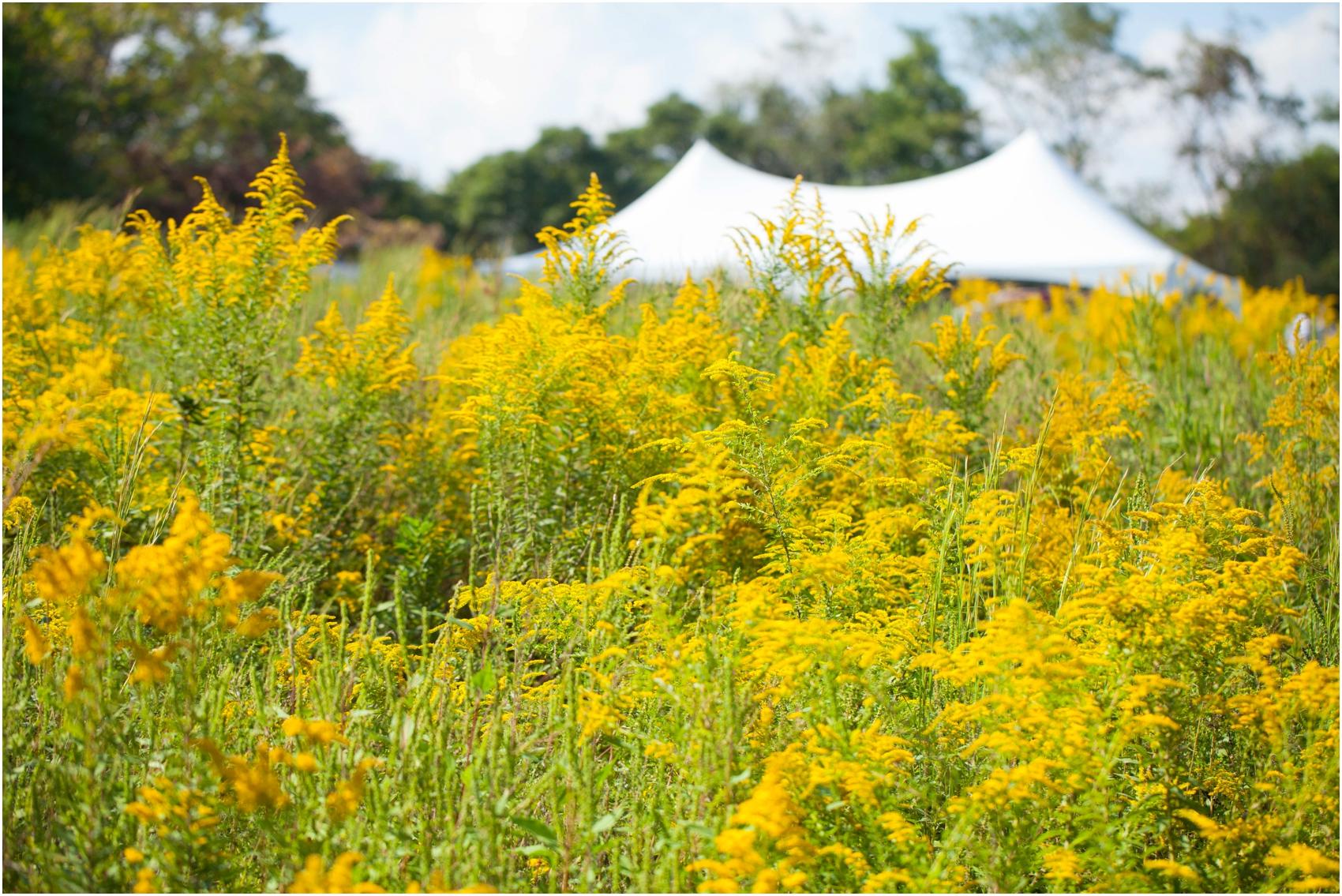 Southern-Illinois-Bohemian-Holy-Boulders-Autumn-Wedding_0967.jpg