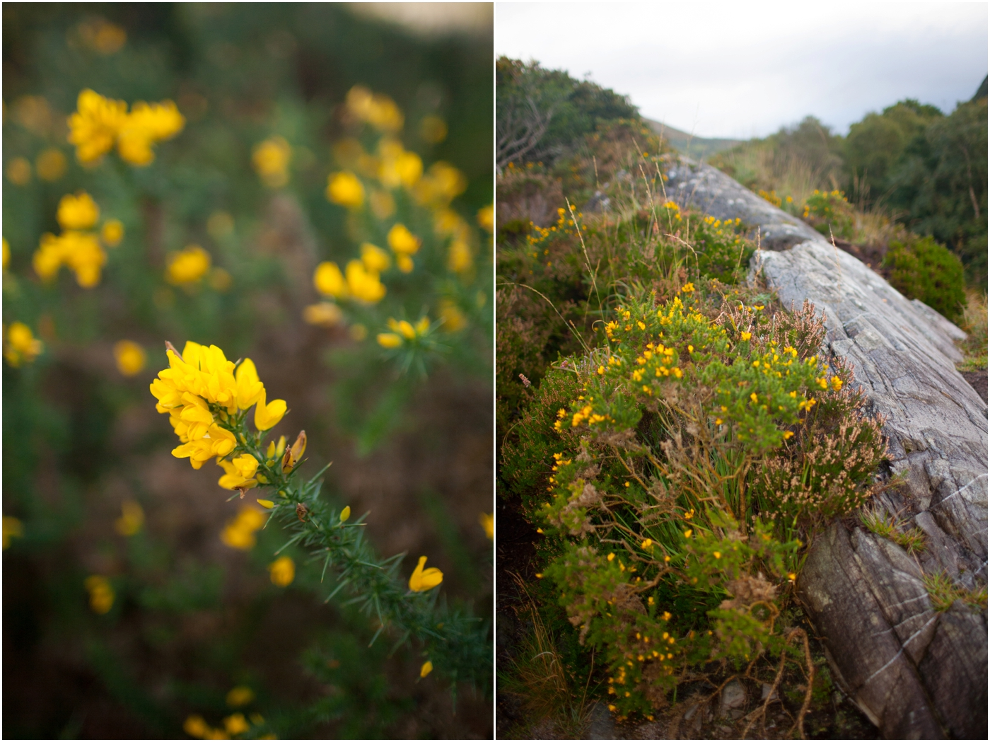 Ireland-Road-Trip-2016-9011.jpg
