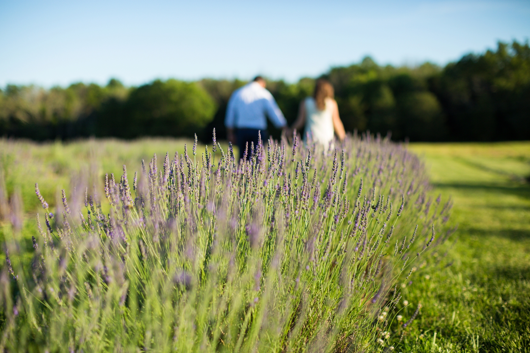 Seven-Oaks-Lavender-Farm-Engagement-Session-2019-0005.jpg
