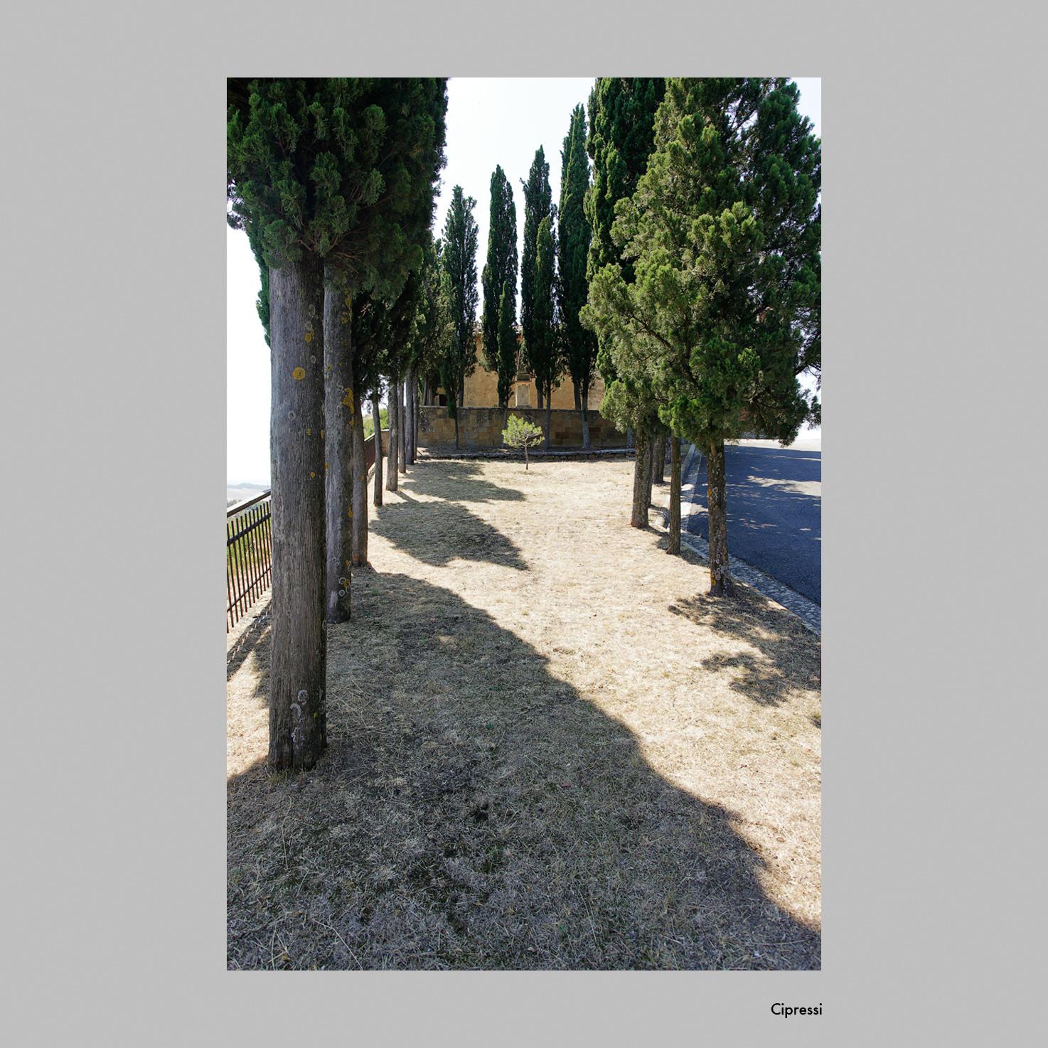Cipressi.jpg