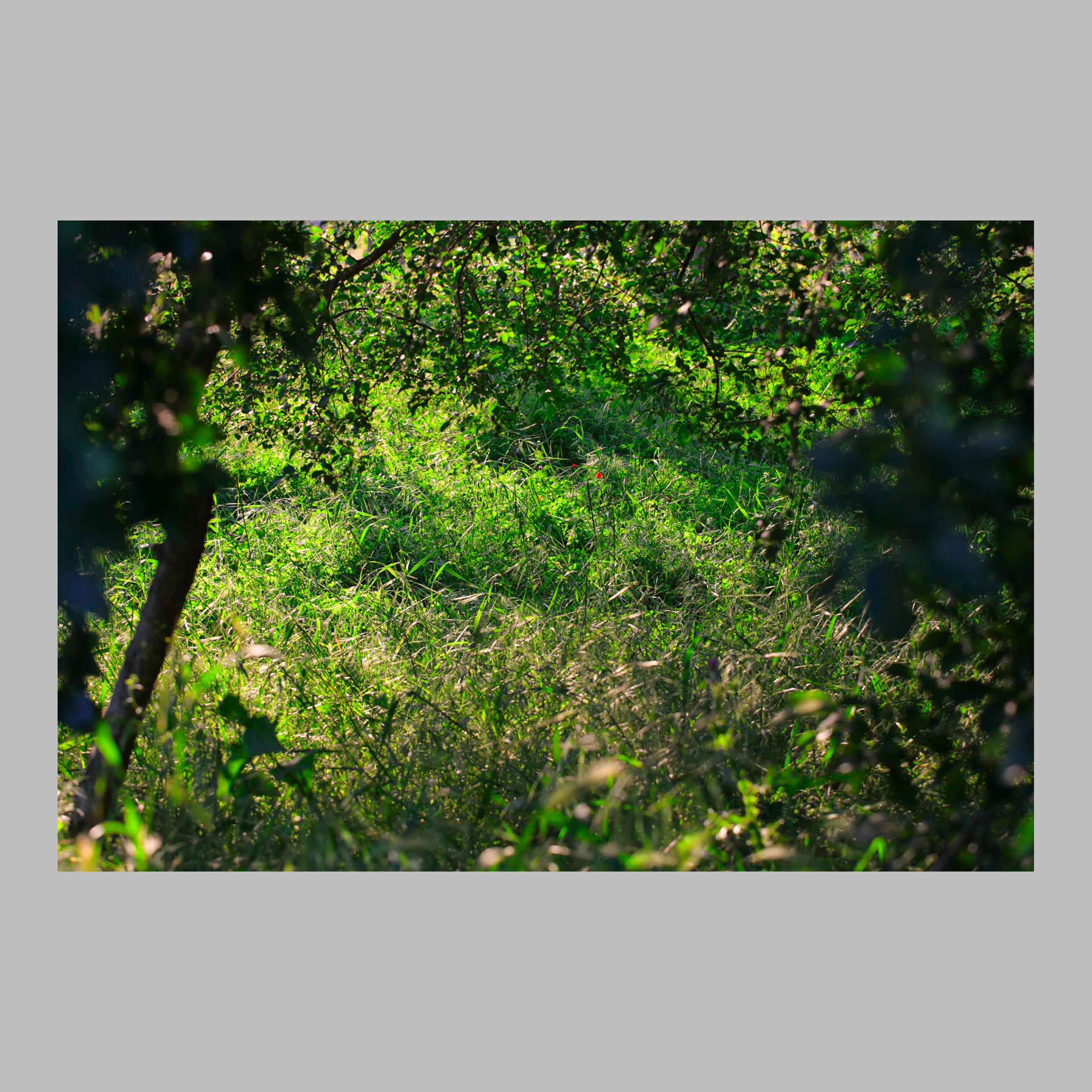 IMG_4974copy-Edit.jpg