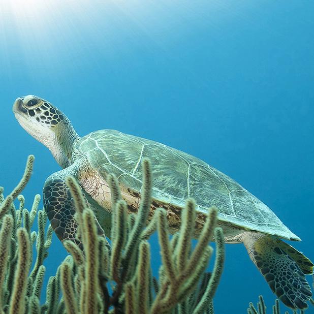 square turtle.jpg