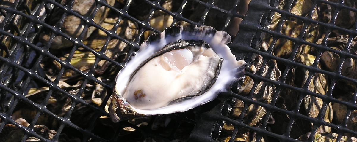 sexlessoysters_Australia-11-123.jpg