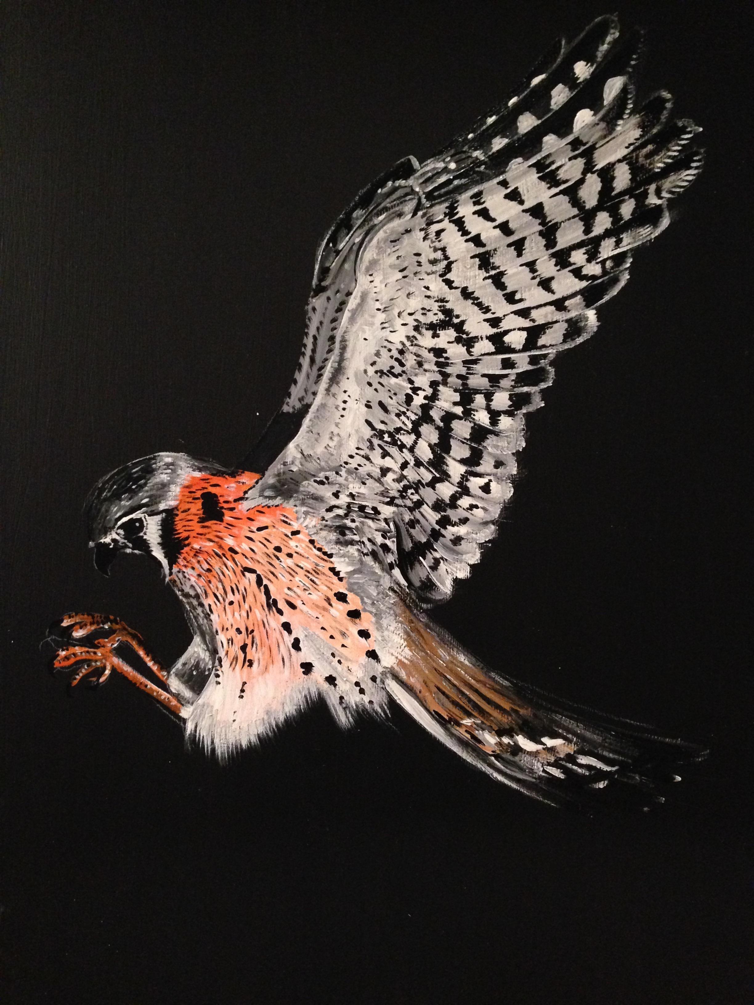 "American Kestrel, 1 shot paint on 14 x 18"" wood."