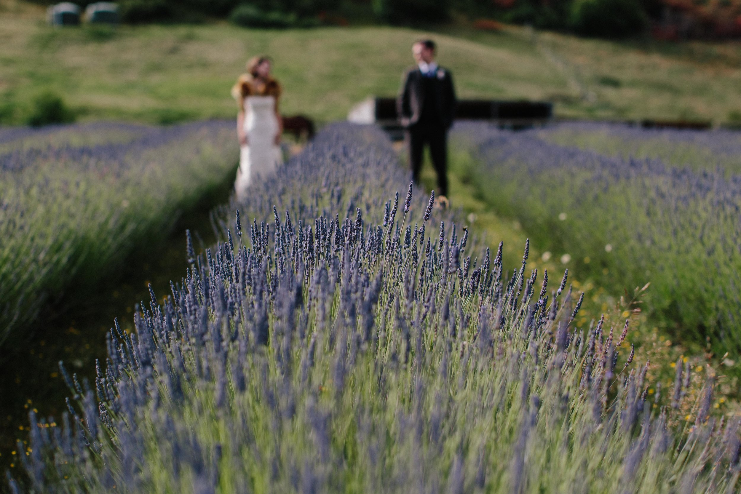 Lavender-Field-Artsy-Wedding-Photographers.jpg