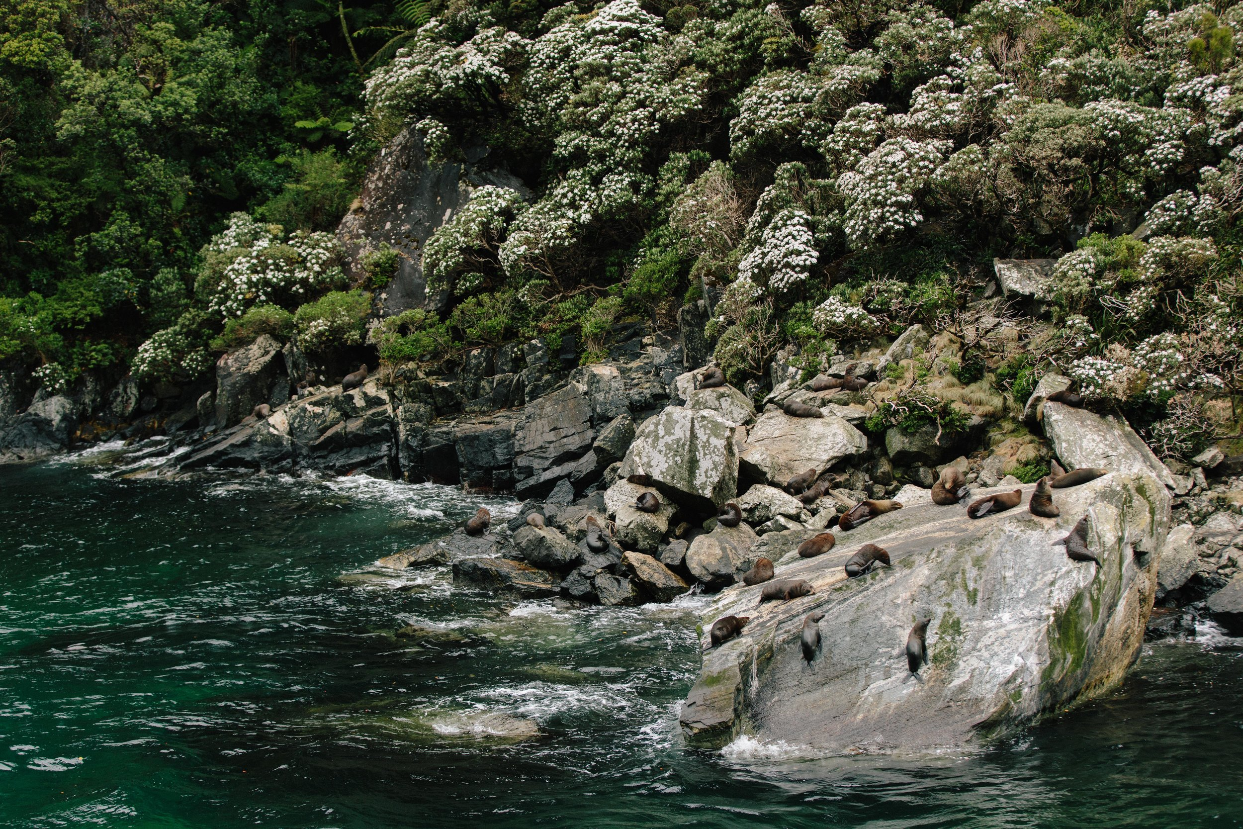 Milford Sound-New Zealand-Sea Lions-Fjord.jpg