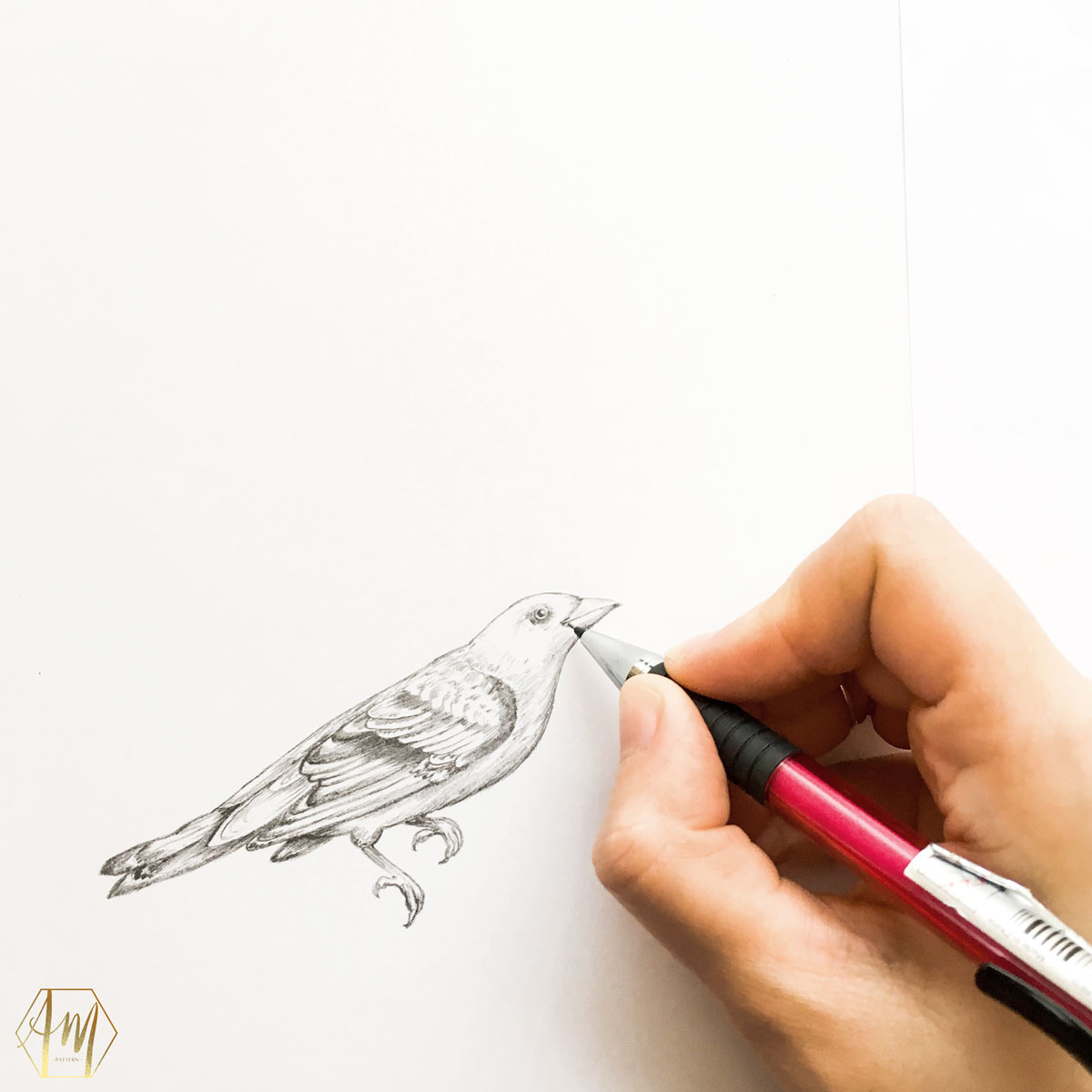 April Mawhinney Design Studio | Bird pencil drawing | Illustration | Surface Pattern Design