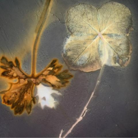 Eileen White | Artist in Residence | Mottisfont, Hampshire