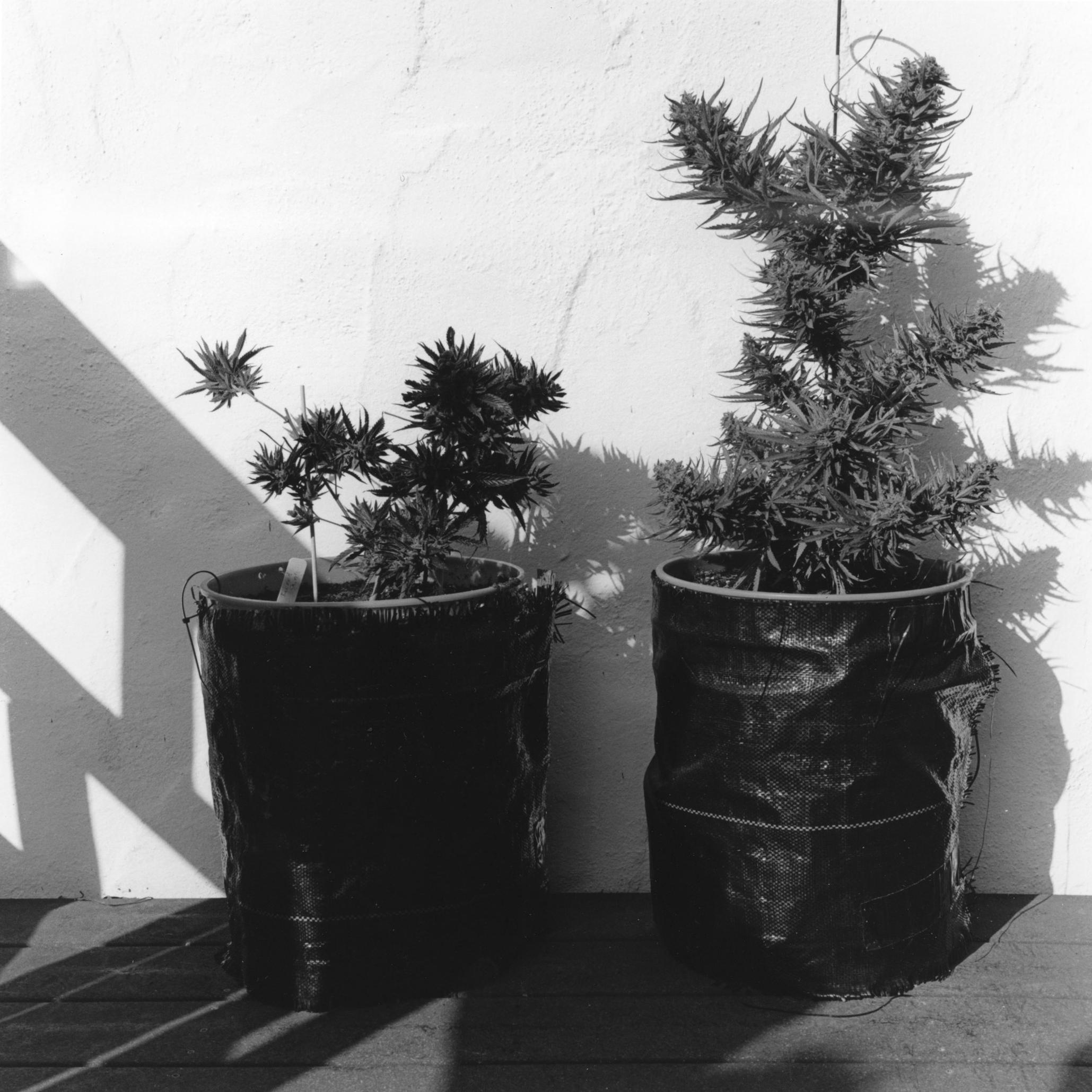 smallplants201.jpg