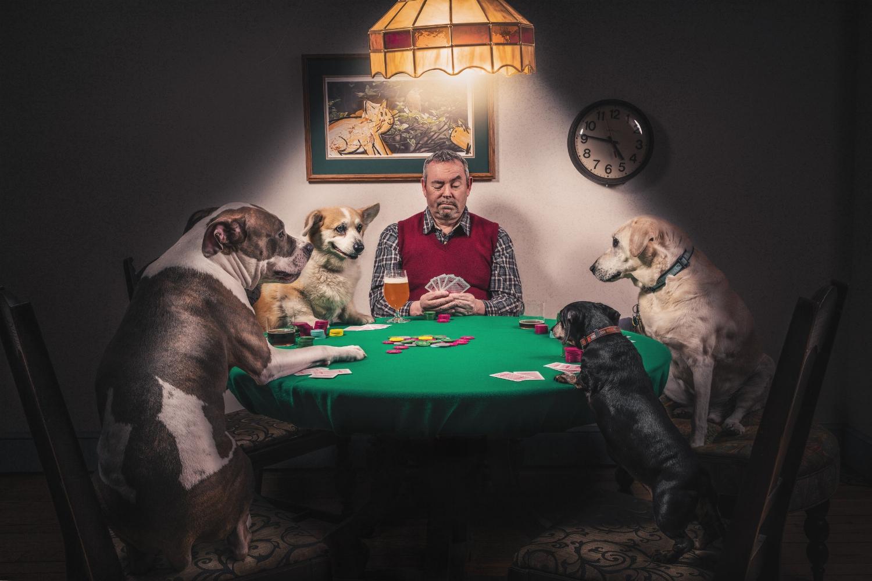 gratisography-man-dogs-playing-cards.jpg