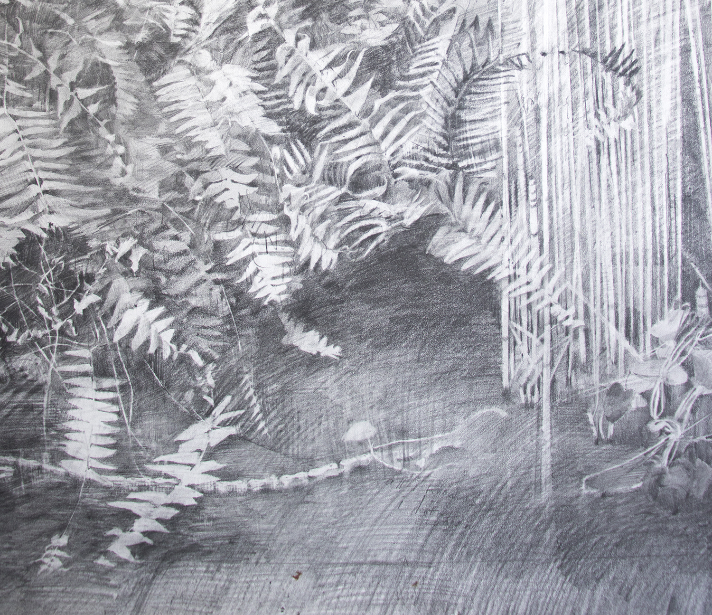 detail fossils3.jpg